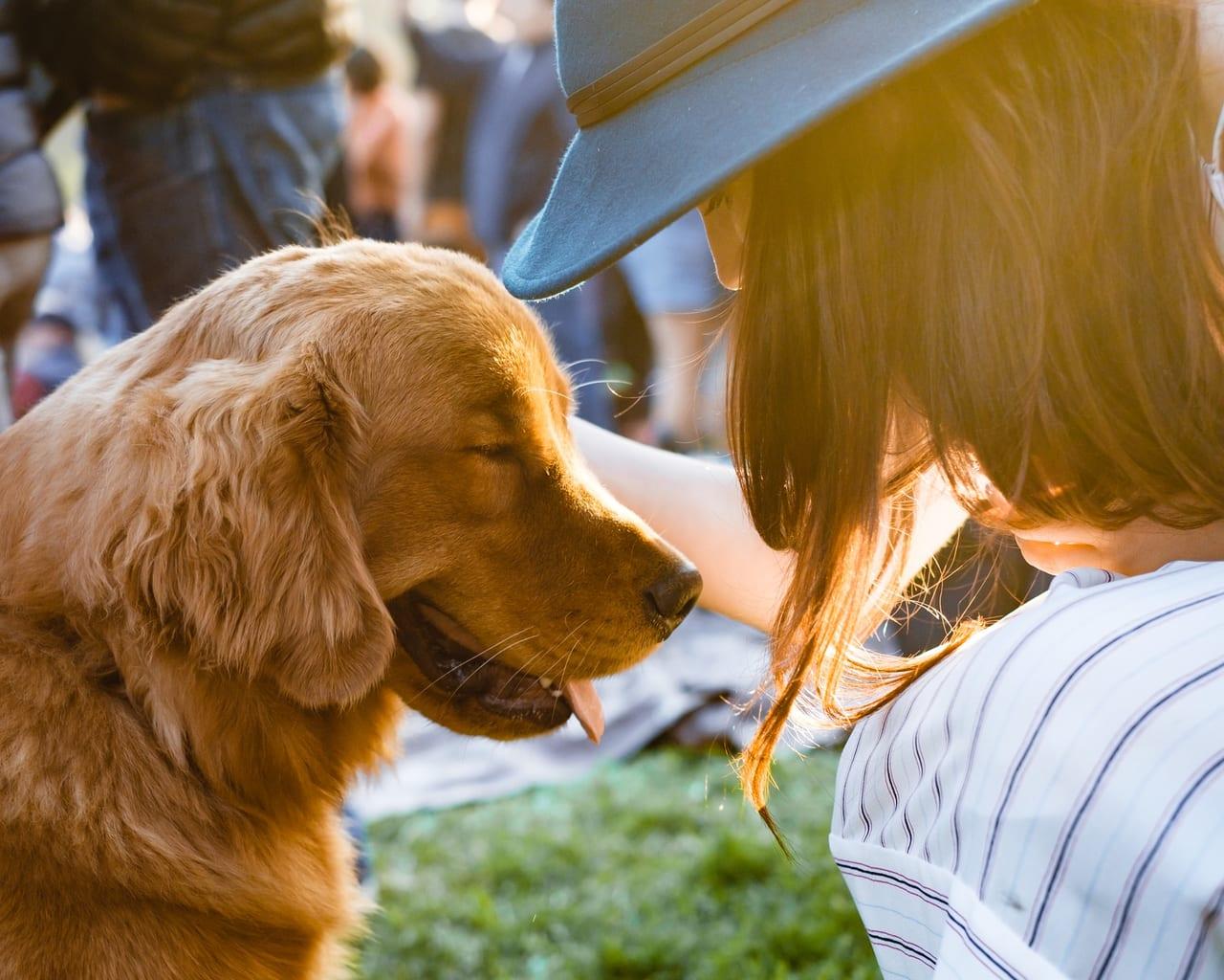 請求方法 ペット保険