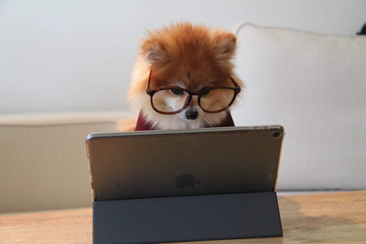 申込方法 ペット保険