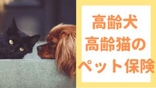 高齢犬・高齢猫