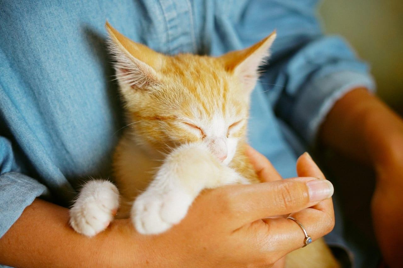 解約 ペット保険