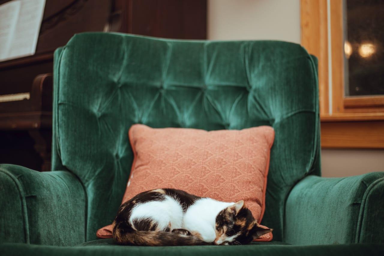 ペット保険 高齢 シニア