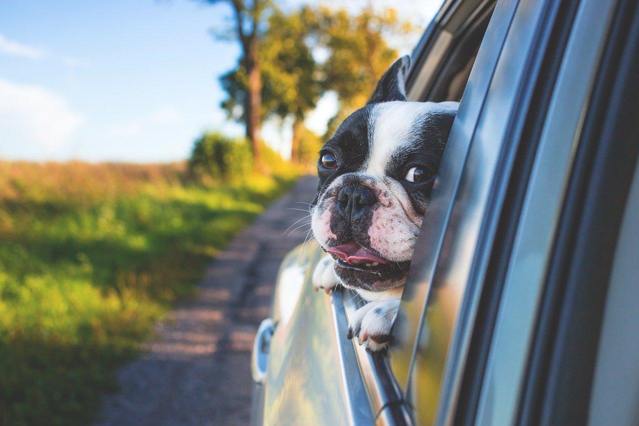 告知義務 ペット保険