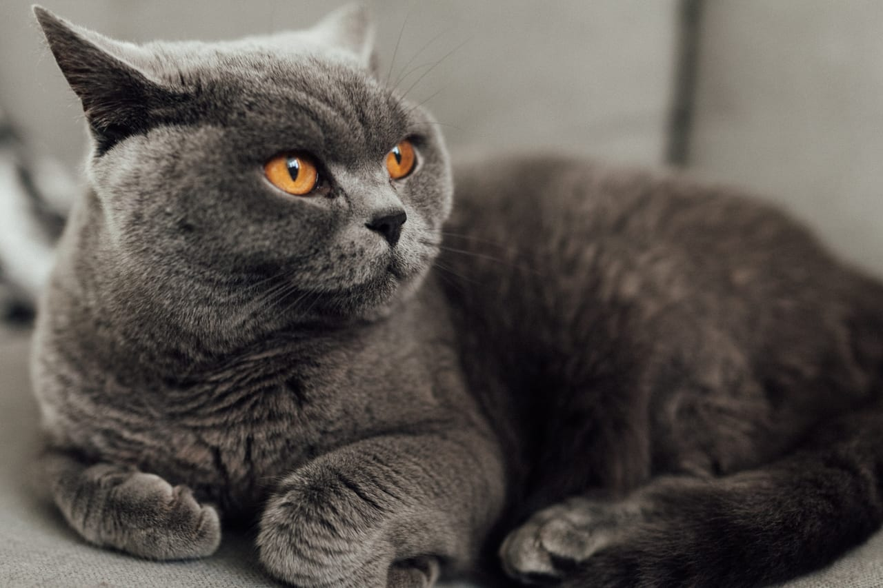猫 ペット保険 必要
