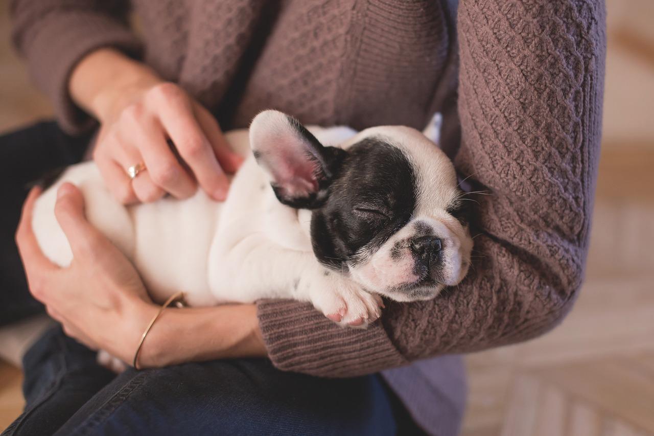 犬 抱っこ