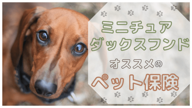 ミニチュア・ダックスフンド ペット保険