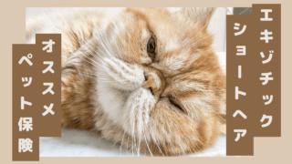 エキゾチック・ショートヘア ペット保険