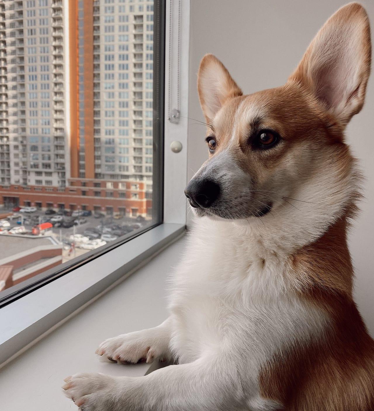 ペット保険 窓口精算 比較
