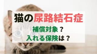 ペット保険 尿路結石症