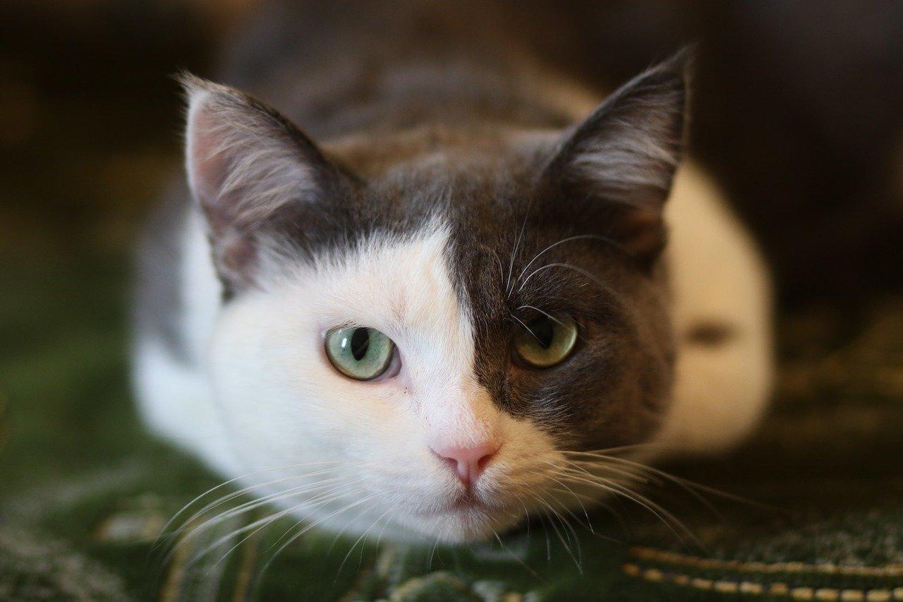 猫 ペット保険