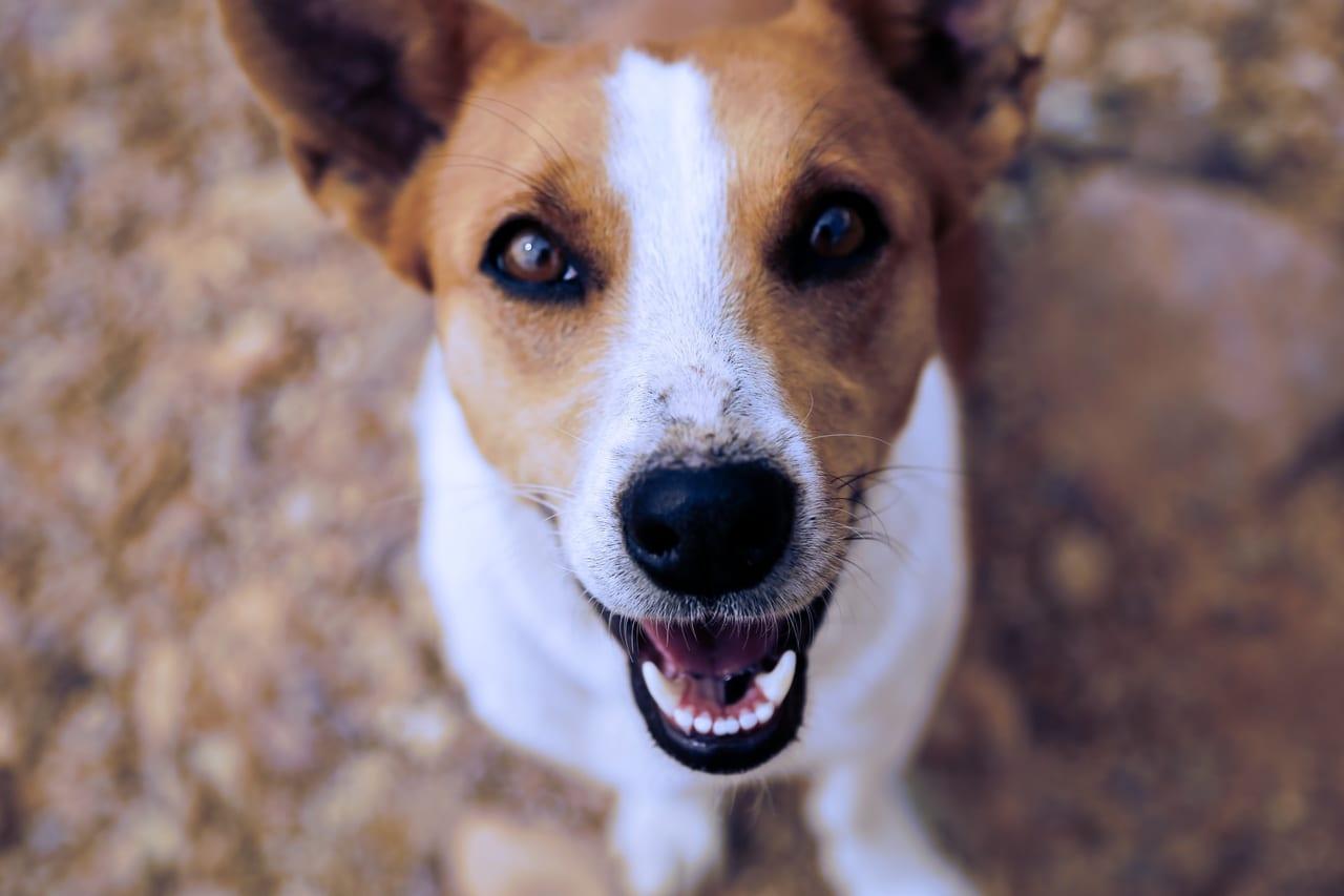 歯周病 ペット保険