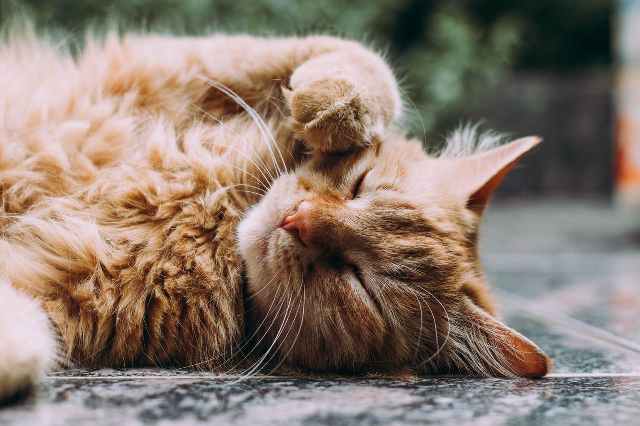 ペット保険 猫 口コミ