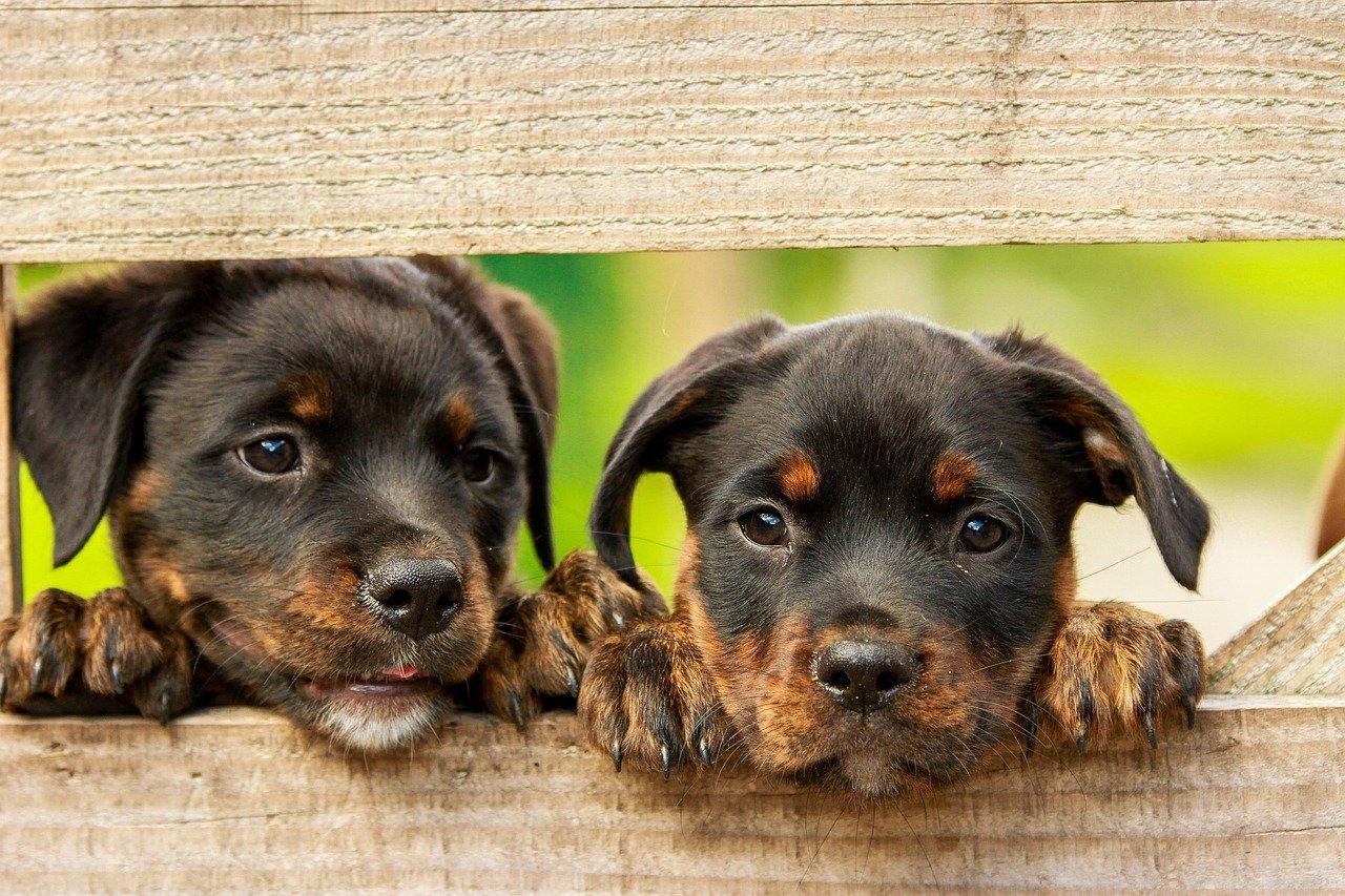 補償対象外 ペット保険