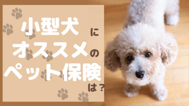小型犬 ペット保険